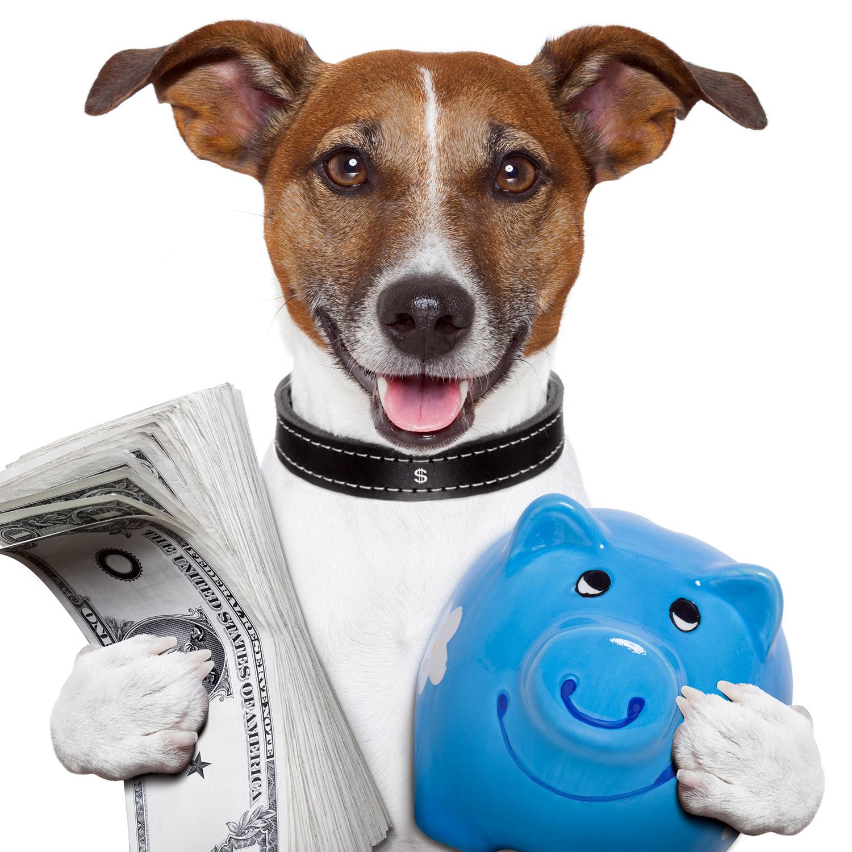 adoption budget
